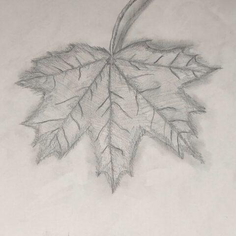Herbstblätter vom Schulhof - Bleistiftzeichnung 1