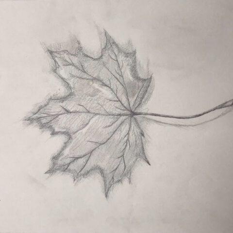 Herbstblätter vom Schulhof - Bleistiftzeichnung 3
