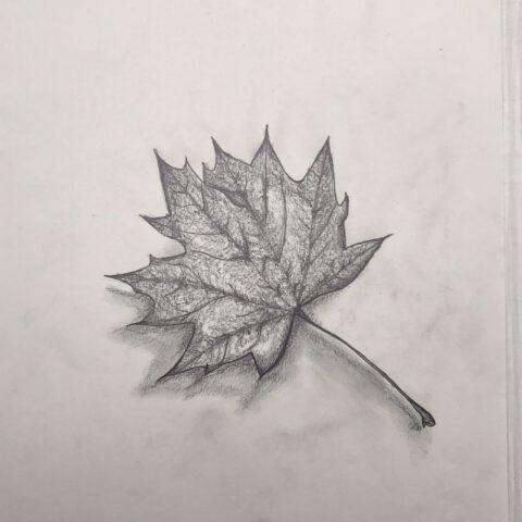 Herbstblätter vom Schulhof - Bleistiftzeichnung 4