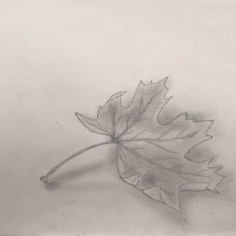 Herbstblätter vom Schulhof - Bleistiftzeichnung 5