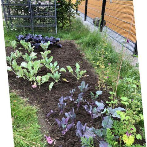 Gartenbau6
